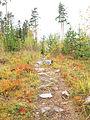 Jyväskylä - trail in Halssila 2.jpg