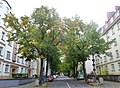 Köln Merlostraße Allee.jpg