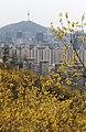 KOCIS Korea Seoul Spring Flowers 09 (8662710596).jpg