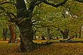 Kaštanový sad v Podkrušnohorském zooparku Chomutov.jpg