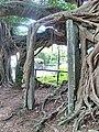 Kam Tin Tree House - 2007-09-30 14h00m44s SN200794.jpg