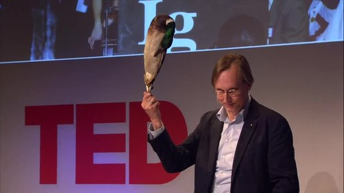 Fiila:Kees Moeliker, How a dead duck changed my life.webm