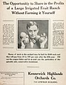 Kennewick Highlands Peach Orchards (1910) (ADVERT 496).jpeg