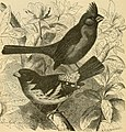 Key to North American birds. Containing a concise account of every species of living and fossil bird at present known from the continent north of the Mexican and United States boundary, inclusive of (14563814510).jpg