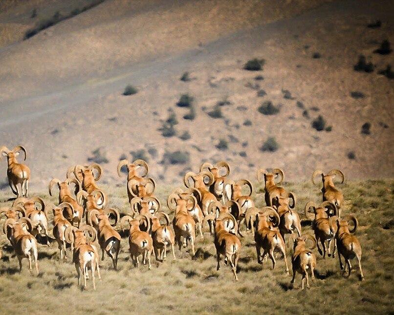 Khabr national park