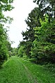 Khorostkiv-dendropark-15056726 05.jpg