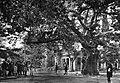 Kifissia 1920 Boissonnas.jpg