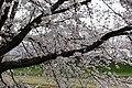 Korakuen garden (26736820021).jpg