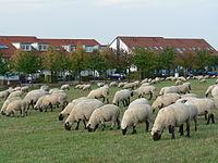רק החוצה כבש הבית – ויקיפדיה CH-59