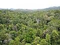 Kuranda QLD 4881, Australia - panoramio (44).jpg