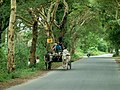 Kyaukse, Myanmar (Burma) - panoramio (4).jpg