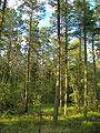 Lüneburger Heide 104.jpg