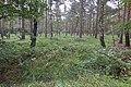 LSG Forst Rundshorn nahe Würmseeweg IMG 0148.jpg
