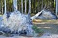 LSG Kühlung - Nienhäger Holz (Gespensterwald) - Sturmschaden (2).jpg