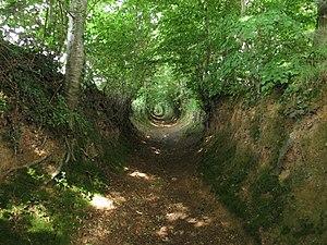 Sunken lane - A hollow way (chemin creux) at La Meauffe, Manche, France