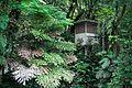 La casita de la selva (3682425533).jpg