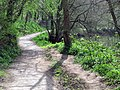 Lagan path at Minnowburn - geograph.org.uk - 774617.jpg