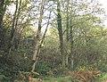 Lakeside Woodland - geograph.org.uk - 269118.jpg