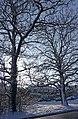 Large Trees, Bramley Road, Enfield - geograph.org.uk - 1149082.jpg