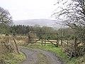 Largybeg Wood - geograph.org.uk - 137557.jpg