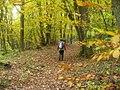 Laubenwald bei Segelfluggelaende Ernzen (Deciduous Woodland by Ernzen Glider Landing Ground) - geo.hlipp.de - 14750.jpg