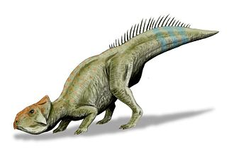 Lance Formation - Leptoceratops gracilis
