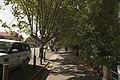 Leura - panoramio (3).jpg