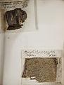 Lichenes Helvetici pars altera 008.jpg