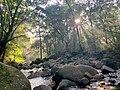 Light rays through trees at sunrise.jpg