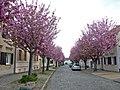 Lindenstr-Werder.jpg