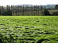 Line of poplars - geograph.org.uk - 998373.jpg