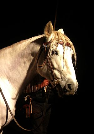 "Winter's Tale (film) - Listo, an Andalusian stallion that plays ""The Horse"""
