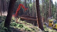 File:Loading an Oregon logging truck (33614791031).webm