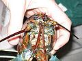 Lobster 08.jpg