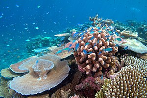 Coral bleaching - Healthy corals