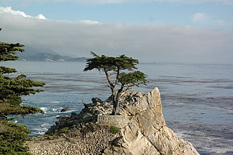 Lone Cypress - Lone cypress tree on the coast of Pebble Beach, CA