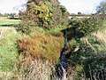 Looking E along a stream or ditch which runs into Fishbourne Channel - geograph.org.uk - 1021673.jpg