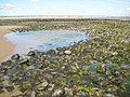 Low tide on Zulu Bank - geograph.org.uk - 1358226.jpg