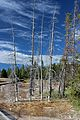 Lower Geyser Basin 03.JPG