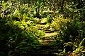 Lyon Arboretum (8330353059).jpg