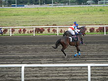Horse race betting philippines star most bet on sport in the world