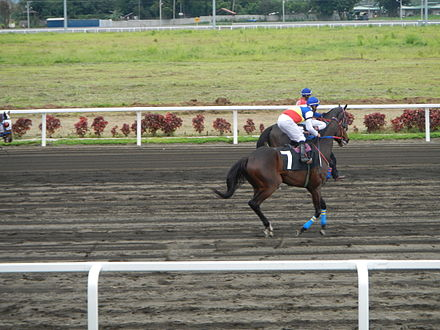 Horse race betting philippines country