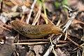 Macro photo of a slug, a series of photos, 2nd of 2.jpg