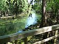 Manatee Springs State Park Florida outlet04.jpg