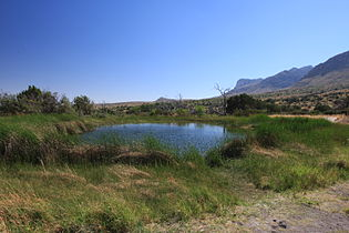 Manzanita Spring in Guadalupe Mountains National Park.jpg