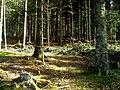 May Greenwood Hochschwarzwald Mount Kandel 1300 mtr wilderness - Master Mythos Black Forest Photography 2013 former bear land - panoramio (1).jpg