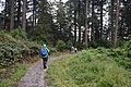McHughs Forest.jpg