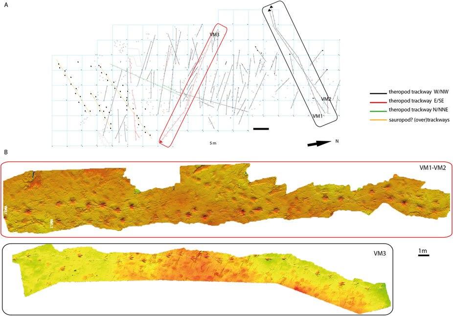Megalosaurid trackways