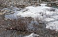 Melting aufeis near Firth River above Joe Creek confluence, Ivvavik National Park, YT.jpg