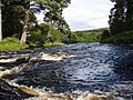 Middle of River Shin - geograph.org.uk - 529051.jpg